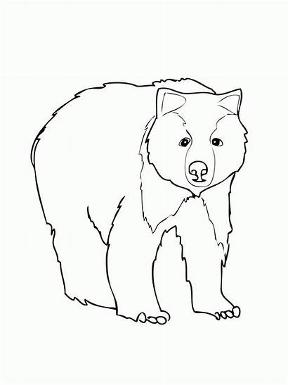 Coloring Bear American Pages Popular