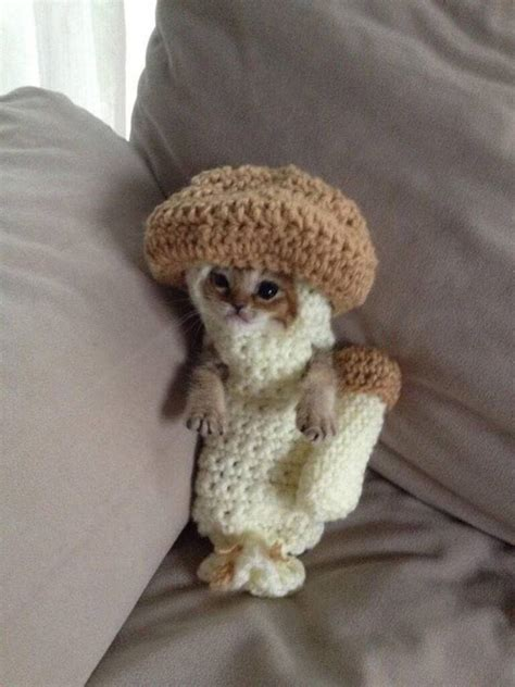 purr fectly cute halloween costumes  pets