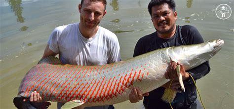 le plus gros point noir du monde p 234 cher en thailande mesurez vous aux plus gros poissons d eau douce au monde