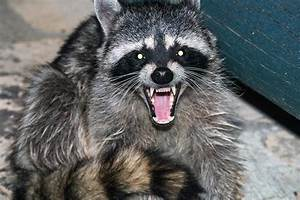 Protect your pet and your family from rabies | kawarthaNOW