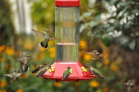 types of bird feeders welcome wildlife