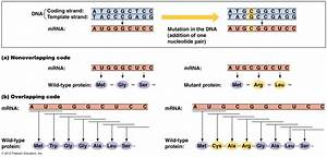 Rna  Complementary  Crna Probes  Crna  Complementary Rna