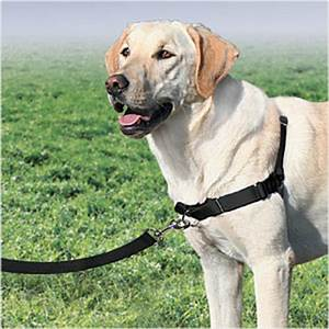 Which harness is right for your dog?