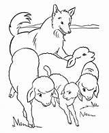 Colorare Coloring Sheep Pecore Cane Pastore Disegno Gregge Herd Ausmalbilder Preschool Animal Bauernhoftiere Farm Disegni Ariete Capre Animales Che Dog sketch template