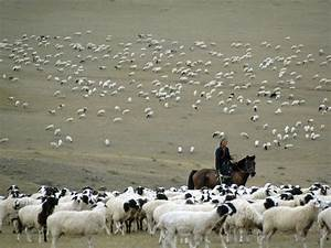 herding - National Geographic Education