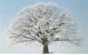 winter tree snow hd wallpaper of winter hdwallpaper2013 com