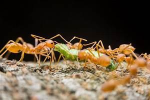 Ameisen Im Garten : rote ameisen im garten fluch oder segen ~ Frokenaadalensverden.com Haus und Dekorationen