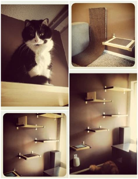 20 Purrfect Diy Projects For Cat Owners  Diy & Crafts
