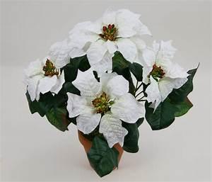Weihnachtsstern Pflanze Kaufen : weihnachtsstern im topf 36cm wei pf k nstliche poinsettie ~ Lizthompson.info Haus und Dekorationen