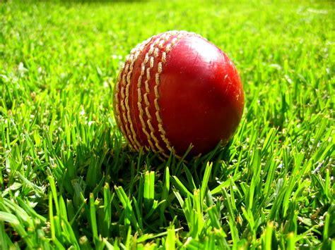 Cricket Images Fichier Cricket On Grass Jpg Wikip 233 Dia