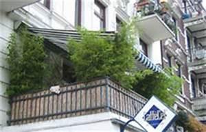 Kletterpflanzen Für Balkon : idealer balkon sichtschutz im winter mit bambus und ~ Lizthompson.info Haus und Dekorationen