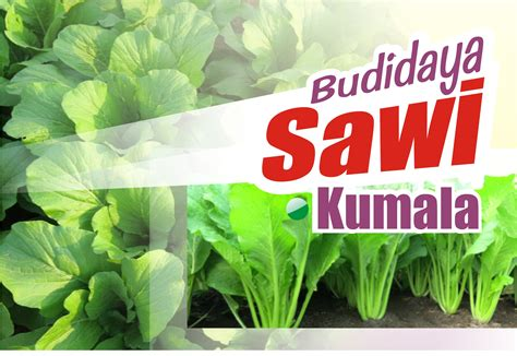 100 resep hits di instagram (2018) oleh. Budidaya Sawi Kumala - BENIH PERTIWI