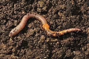 Vers De Terre Acheter : une pi ce de th tre pour r habiliter le ver de terre lib ration ~ Farleysfitness.com Idées de Décoration