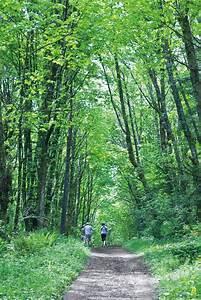 Best 25+ Forest park ideas on Pinterest | Zhangjiajie ...
