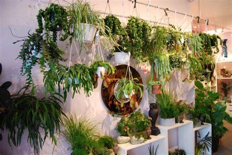 Pflegetipps Für Hängende Zimmerpflanzen