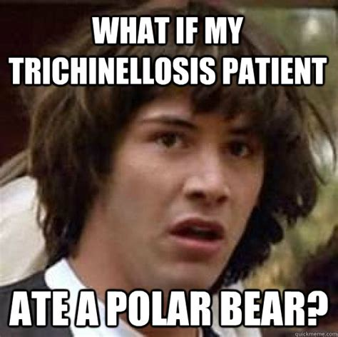 Patient Bear Meme - what if my trichinellosis patient ate a polar bear conspiracy keanu quickmeme