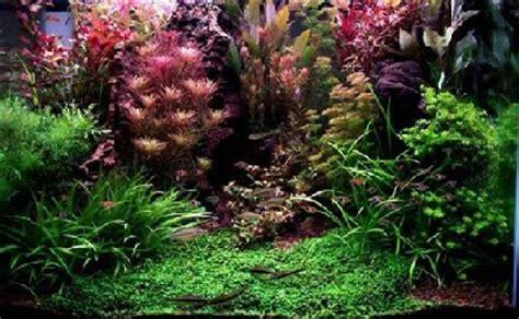 Aquariumplanten achtergrond