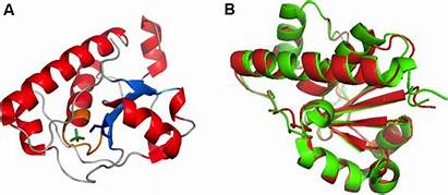 Polysaccharide Frontiersin Wzb Figure Pdb Structure