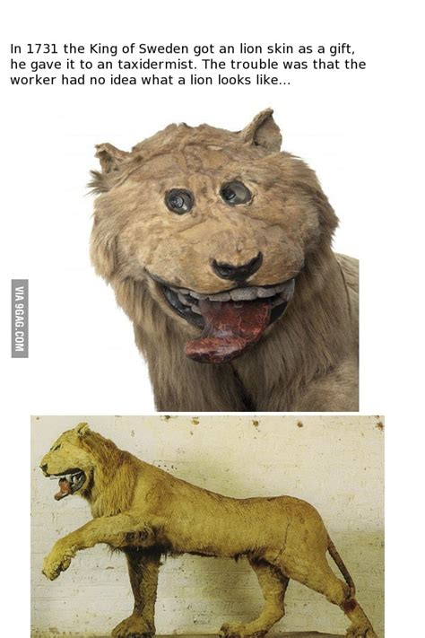 bit   taxidermy fail gag