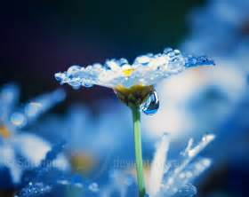 chandelier diamonds 25 beautiful exles of macro flower photography mow