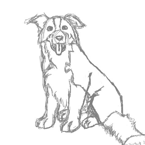 Rough Collie Dog Drawing Coloring Coloring Pages