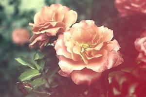 Pressed Flower Delights: Flower Tumblr
