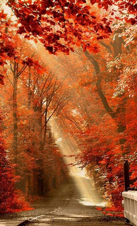 29545 Best I Love Fall! Images On Pinterest  Autumn Fall, Fall And Autumn Leaves