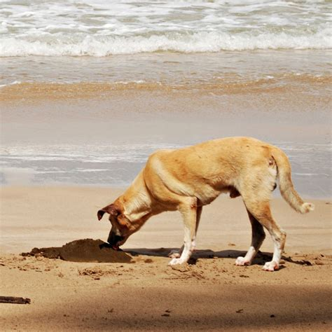 Why Do Dogs Eat Their Own Stool - quot why do dogs eat quot is a tough question to answer
