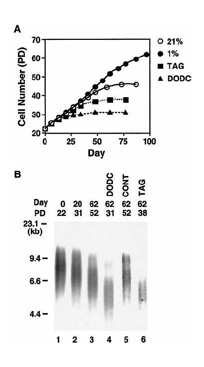 Telomerase Span Hypoxia Cell Under Inhibition Effects