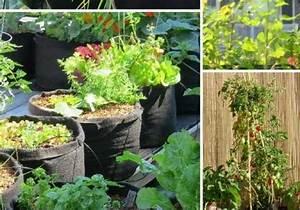 Arbres Fruitiers Nains En Pleine Terre : arbre fruitier nain pour pot ou pleine terre choisir ~ Premium-room.com Idées de Décoration