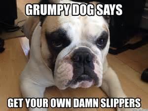Grumpy Dog Meme - grumpy dog
