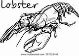 Trap Sketch Crab Lobster Coloring Ocean Pages Template Seafood sketch template