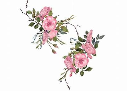 Clipart Roses Watercolor Dusty Pink Painted Hand