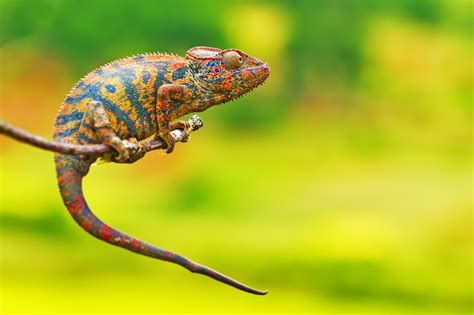 Cameleon Colors  Flickr  Photo Sharing