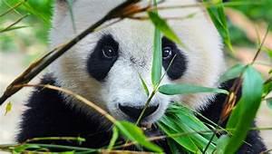 World Wildlife Fund - WorldWildlife.org | Viget