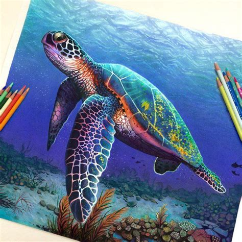 what color is a turtle davidson drawing amazing colored pencil drawing
