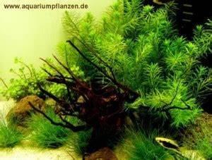 Aquarium Kies Kaufen : nano aquarium pflanzen set bepflanzung einfach gemacht ~ Orissabook.com Haus und Dekorationen