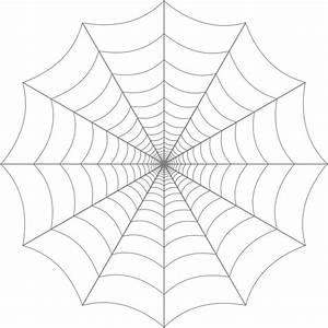 spider-web4