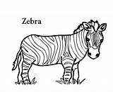 Zebra Coloring Pages Printable Colouring Zebras Head Clipart Drawings Pattern Animal Line Drawing Realistic Clipartbest Pencil Liberal Getcolorings Sheet Pictur sketch template