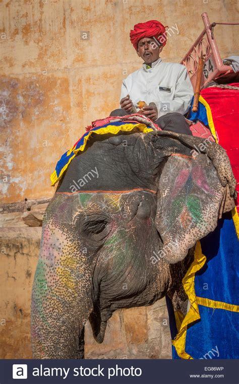 indian elephant design stock  indian elephant