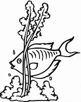 Coloring Seaweed Pages Fish Clipart Outline Clip Printable Cliparts Colouring Library Mycoloring Getcolorings Getcoloringpages Clipartbest sketch template