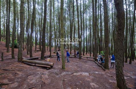 hutan pinus imogiri bantul  tempat wisata gratis ala