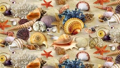 Sand Coral Wallpapers Seashell Starfish Shells Seashells