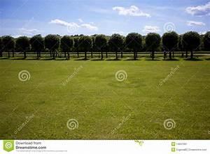 Summer Park Background Stock Image - Image: 14647281