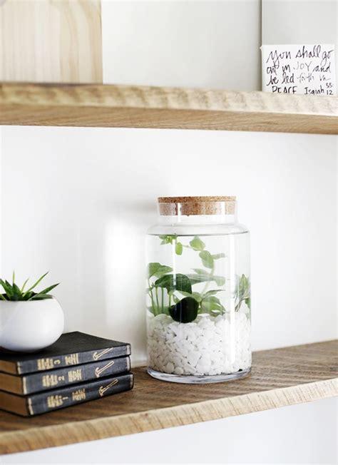 plantes pour chambre les 25 meilleures idées concernant plantes aquatiques sur