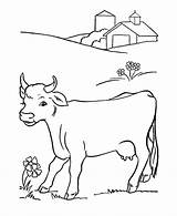 Coloring Cow Pages Animal Printable Cows Colouring Farm sketch template