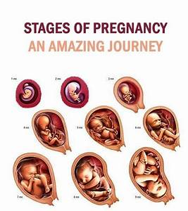 63 Best Images About Pregnancy  U0026 Food On Pinterest