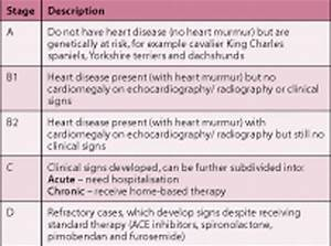 congestive heart failure your dog chf and the mitral valve