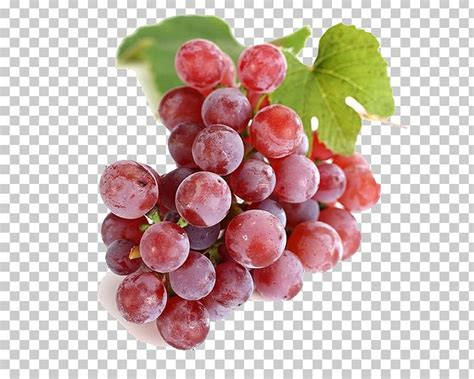 seed grape extract flavor juice oil clipart pngio