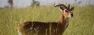 Afrikan Antilope : african antelope guide 2020 africa sky ~ A.2002-acura-tl-radio.info Haus und Dekorationen